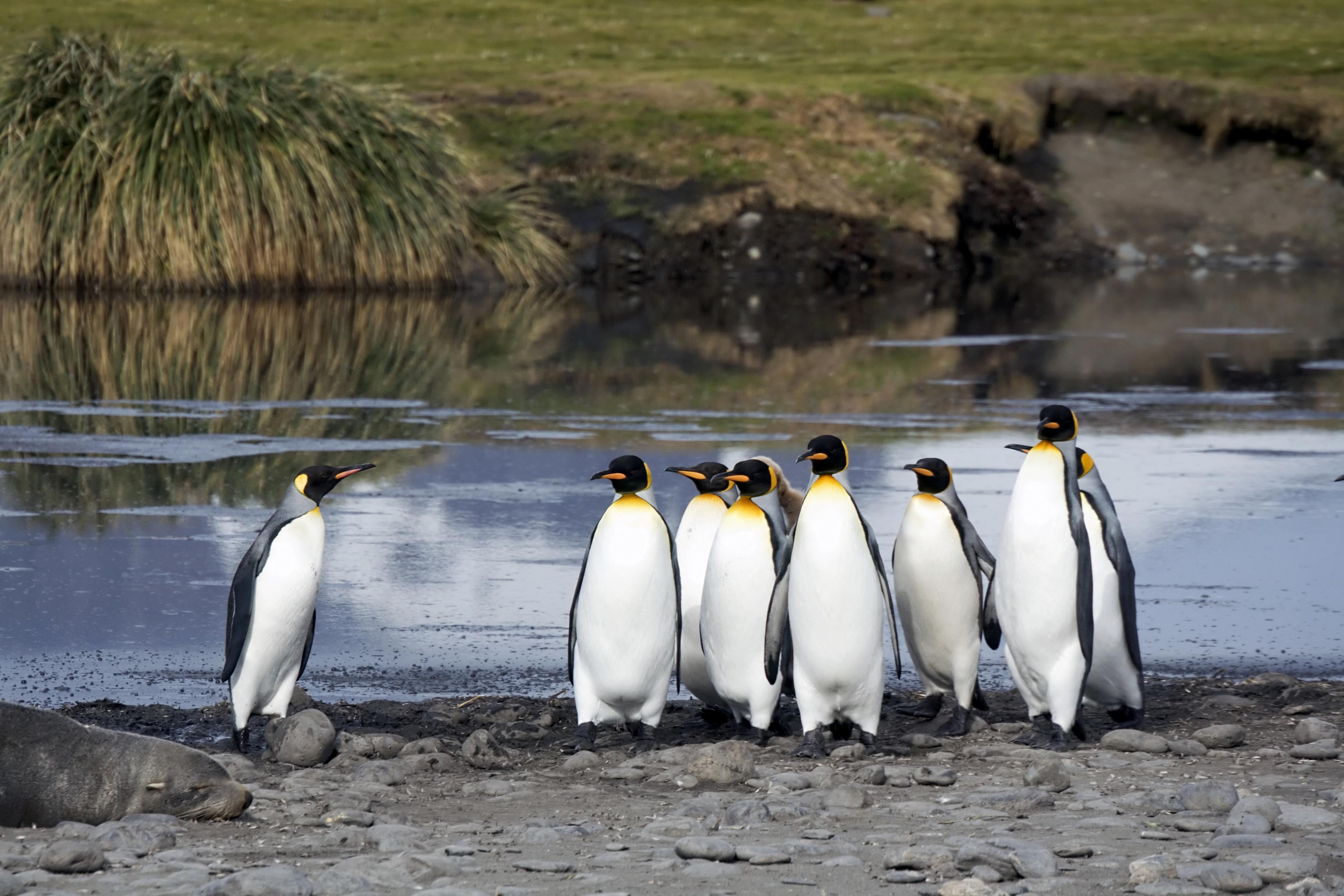 is_vg2016_pingouins_istock_000002915789_large.jpg